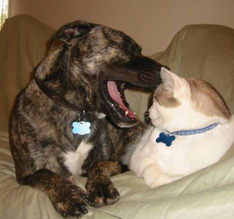 Compatible Cat and Dog (Photo by Ohnoitsjamie/Creative Commons via Wikimedia)