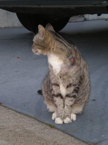 Cat (Photo by Broken Sphere via Wikimedia Commons)