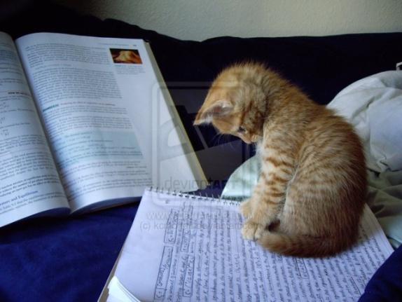 Cat Reading Manuscript (Image via tumblr)