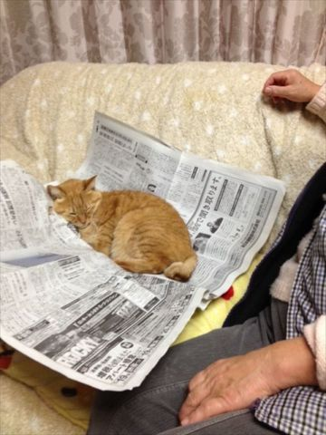 Cat Napping on a Newspaper (Image via Pinterest)