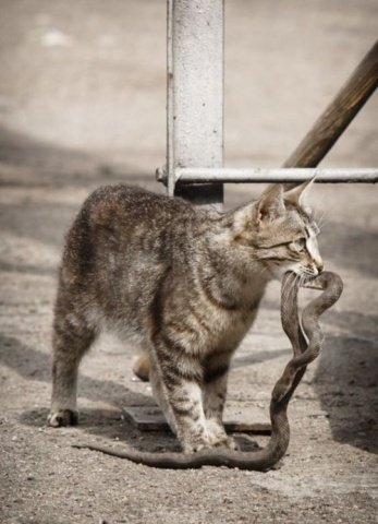 Hunting Kitty (Photo via Tumblr)