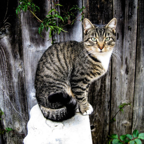 Cats and Zoonotic Diseases: What Can You Catch From Them?: Cats can spread illnesses to humans
