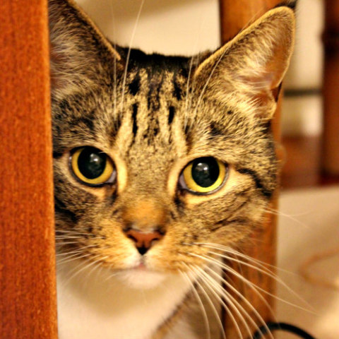 Cats Can Carry Transmittable Illnesses: Take your cat in for annual exams