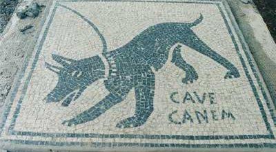 Cave Canem: Source: athenaergane.tumblr.com