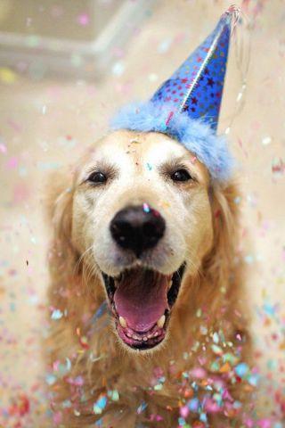 Yappy New Year's Dog (Image via tumblr)
