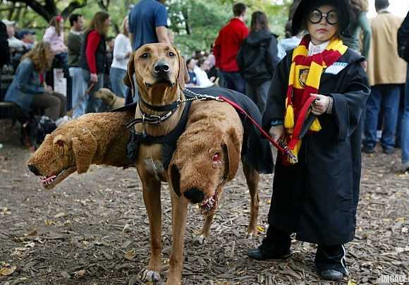 known as cerberus to those of a certain age and fluffy to fans of the book and film harry potter and the philosophers stone this legendary three headed