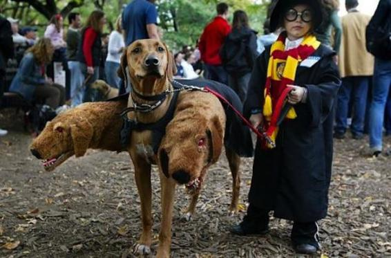 """Fluffy"" the Cerberus and Harry Potter (Viral Internet Image, 2009)"