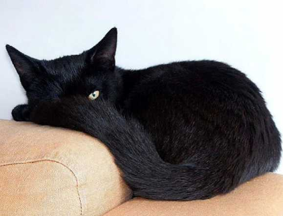 Night Amp The Kitty 10 Beautiful Amp Mysterious Black Cats