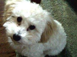Chew Barka, the dog with 2012's wackiest name: image via petinsurance.com/wackypetnames/