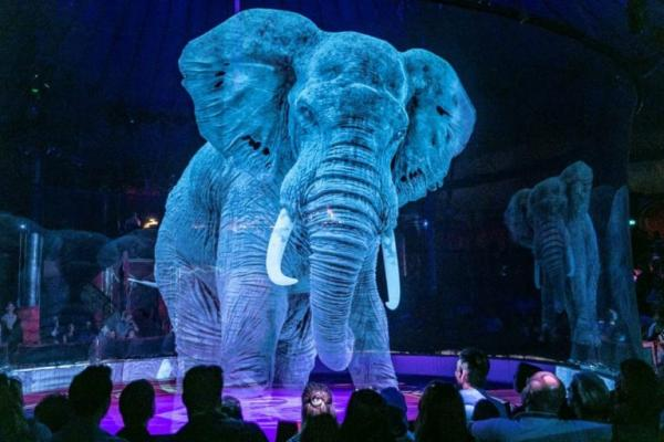 Circus Elephants Retiring In Denmark