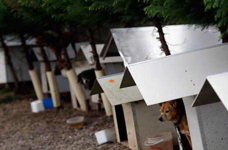 Favela for homeless dogs in Caxias do Sul: image via DJMICKreally
