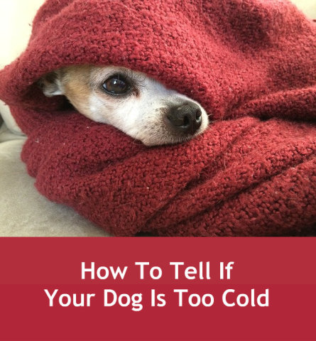 How To Tell If Your Dog Is Too Cold | Petslady com