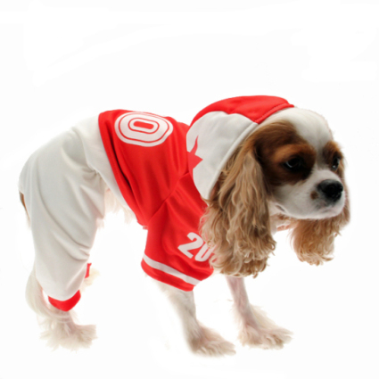 Cavalier King Charles Spaniel in college football jersey: image via baxterboo.com