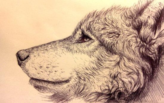 Curveball by Kodriak: Some excellent pen rendering, wolf art by Kodriak.