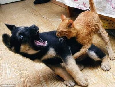Kitten Biting Puppy: Source: Picturescool