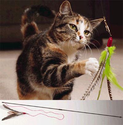 Da Bird cat pole toy