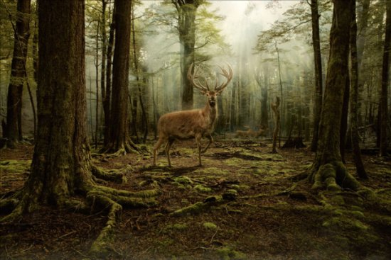 Deer Art by Brown: This animal image draws you into a world worth exploring.