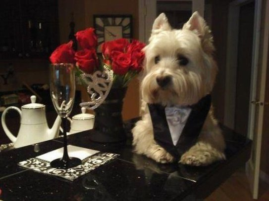 Romantic Dog (Image via Pinterest)