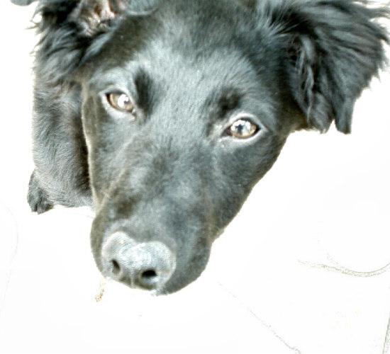 Where Can I Buy Humankind Dog Food