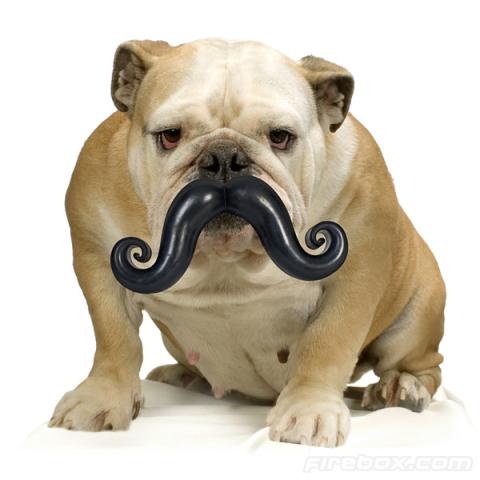 Dog wearing the Humunga 'Stache