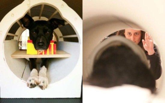 'McKenzie,' lies still in the fMRI machine, while trainer gives cue: image: Berns et al via wired.com