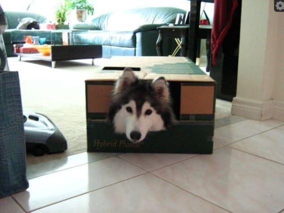 Tally in the Box (Image via Imgur)