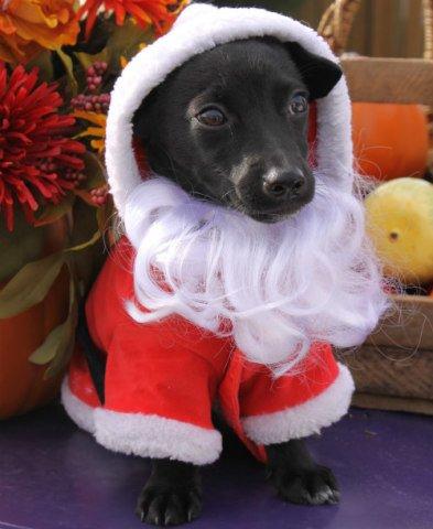Doggy Santa: Keep pets away from chocolate