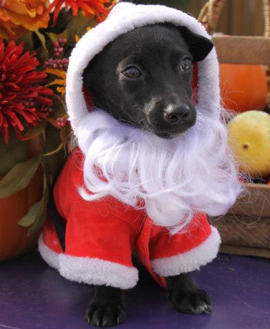 Doggy Santa: Holiday Pet Photography