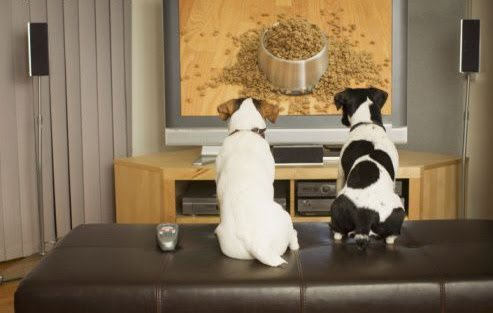 Dogs watching TV (and probably salivating): image via sodahead.com