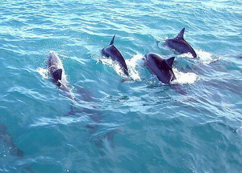Cause of Dolphin Deaths Still Being Questioned