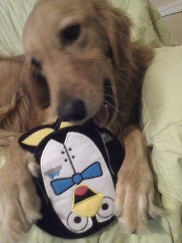 """No, Jessie! Don't eat Tux!"" -Me"