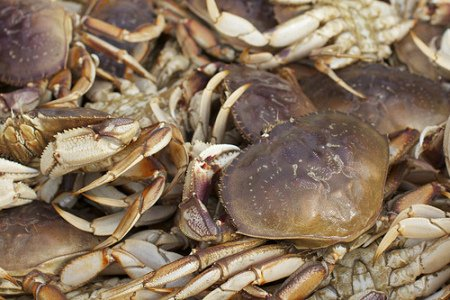 Dungeness Crabs: (Photo by David Gallagher /Creative Commons via Flickr)