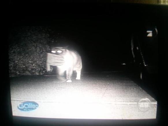Dusty, the Klepto Kitty Caught on Camera (Photo via Facebook)