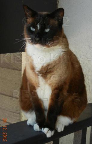 Dusty, the Klepto Kitty (Photo via Facebook)
