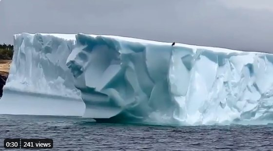 World's Coolest Bald Eagle Hitches Ride On Enormous Iceberg
