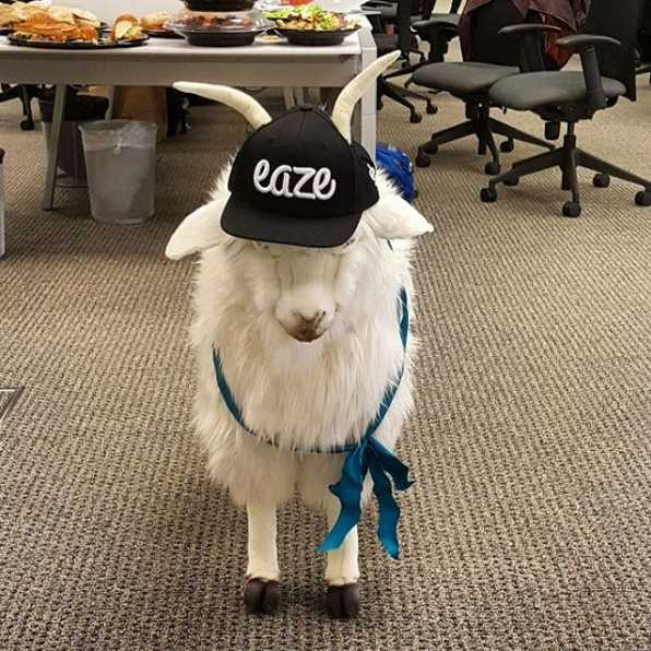 Eaze Medical Marijuana Delivery Startup Really Gets Our Goat