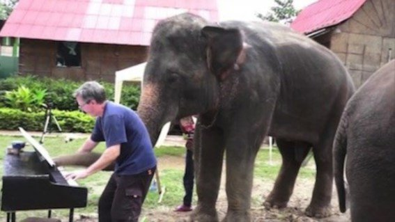 Peter the Pachyderm Plays Piano (You Tube Image)
