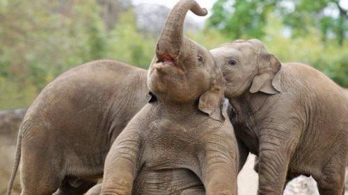 Baby elephants at Dublin Zoo