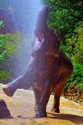"""Elephant in the """"Rain"""" (Image via Lovely Cool Photo of the Day)"""