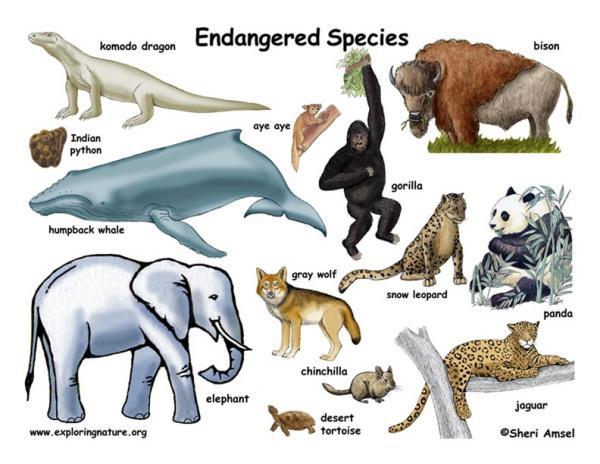 Endangered Species Just Became More Endangered
