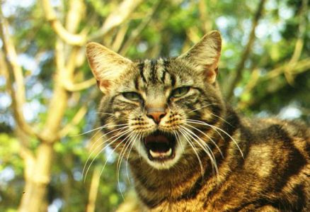 Cat in Foliage (Public Domain Image)