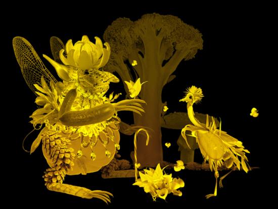 Faeries by Kim: Some bird like fairys by Wonman Kim.