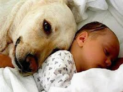 Loving Dog and Baby
