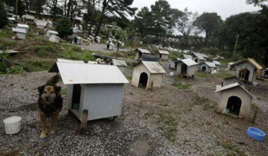 Favela for homeless dogs in Caxias do Sul: image via acidcow.com
