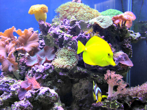 Feeding Fish Fruits & Vegetables: Fresh fruits & veggies for fish