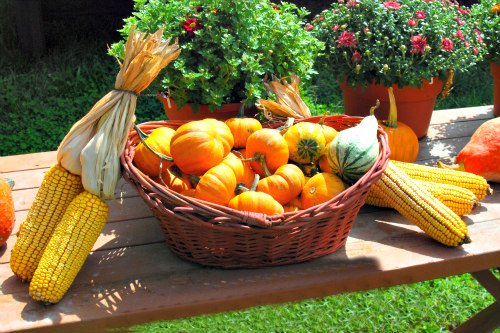 Feeding Fish Fruits & Vegetables: Squash, pumpkins, melons and sweet corn can be fed to fish