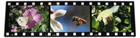Film strip montage on canvas by photo-canvas.com
