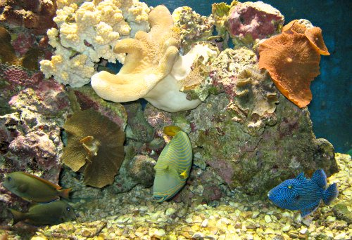 health benefits of an aquarium