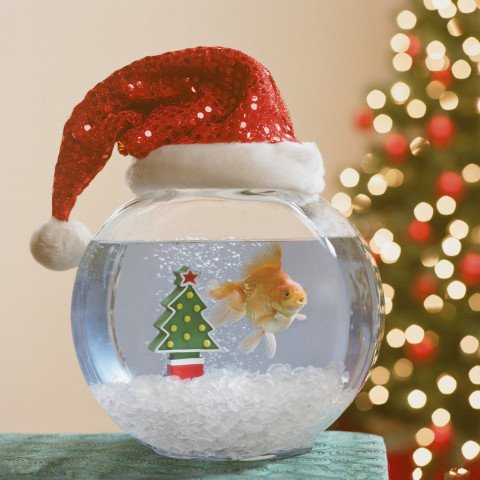 top your fish bowl with a santa hat - Christmas Aquarium Decorations