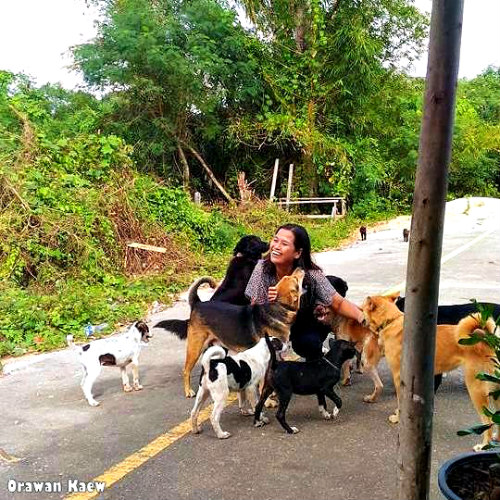 Food for street dogs in Thailand